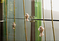 2011_10_29_465_owl